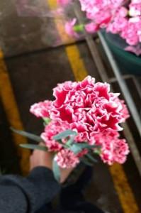 Carnation Cherno