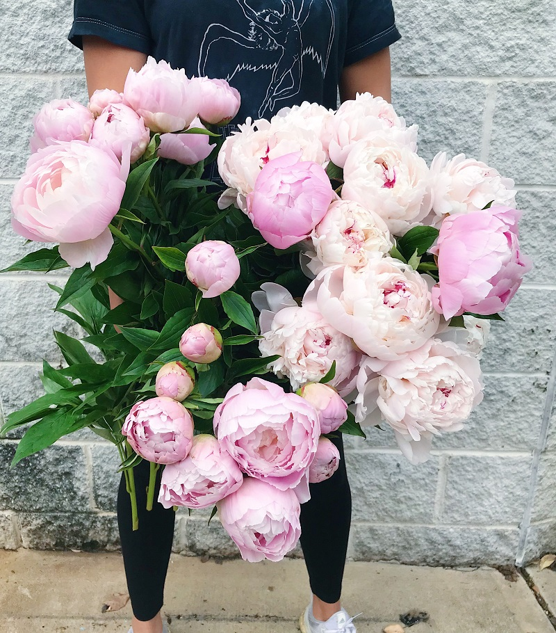 Understanding the Price of Peonies