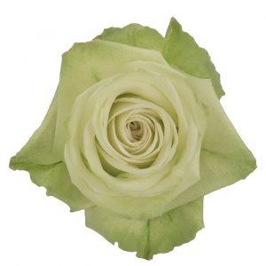 Rose Green Green Tea