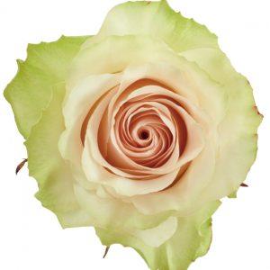 Rose Green Cava