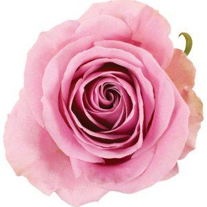 Rose Pink Keano