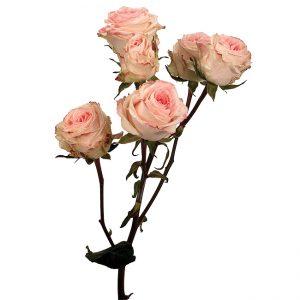 Roses Spray Peach Antara Folies