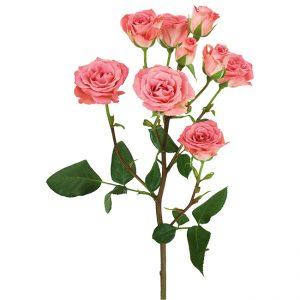 Roses Spray Pink Brilliant Stars Pink