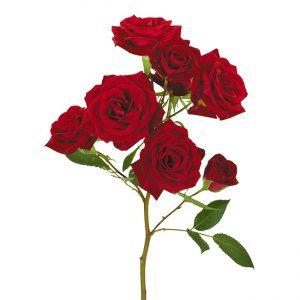 Roses Spray Red Brilliant Stars Red