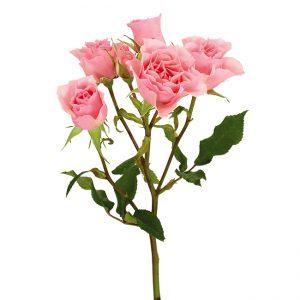 Roses Spray Pink-Medium Elba