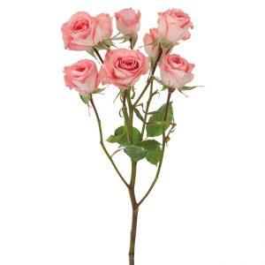 Roses Spray Pink-Medium Elegant Rosever