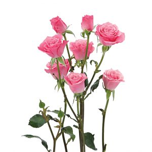 Roses Spray Pink-Medium Eva