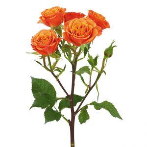 Roses Spray Orange Neo