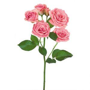 Roses Spray Pink Odilia