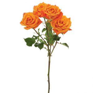 Roses Spray Orange Orange Sensation