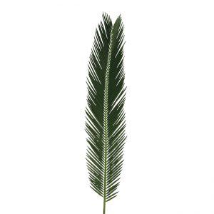 Palm Sago