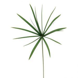 Papyrus Umbrella