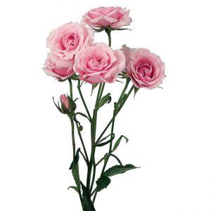 Roses Spray Pink-Light Pink Majolica