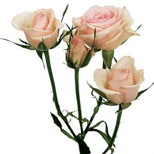 Roses Spray Peach Porcelina