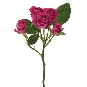 Roses Spray Pink-Hot Purple Iriska