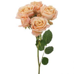 Roses Spray Peach Sahara Sensation
