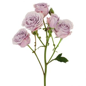 Roses Spray Lavender Silver Mikado