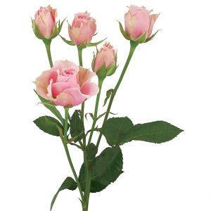 Roses Spray Pink-Medium Sweet Sensation