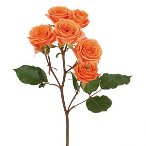 Roses Spray Orange Tangerine
