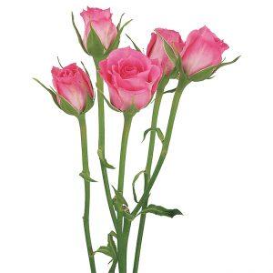 Roses Spray Pink-Medium Twinkle Bride