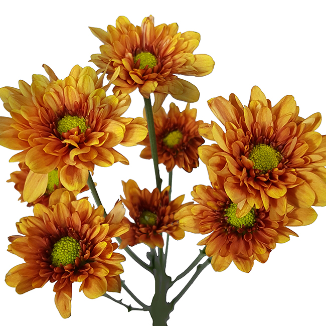 Florange Dark