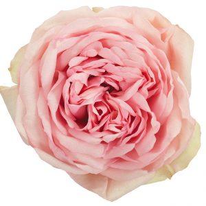 Roses Garden Pink-Light Bridal Piano