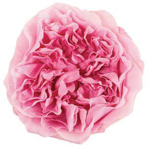 Roses Garden Pink-Light Miranda