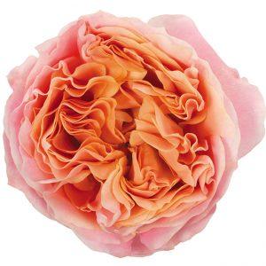 Roses Garden Pink Rosa Loves Me