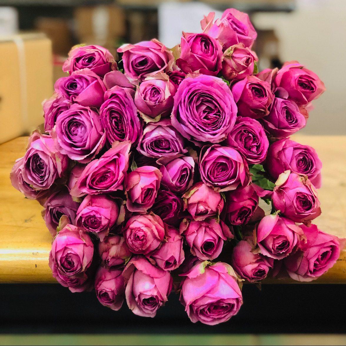 Spray Rose Lavender Lace