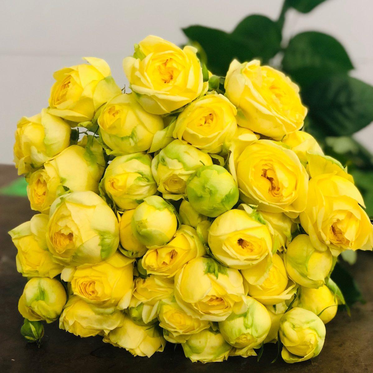 Spray Rose Yellow Katrina