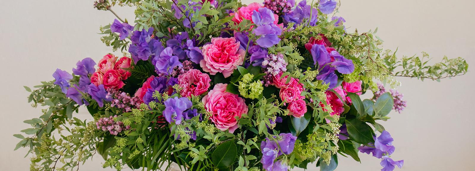 Introducing the Princess Meiko Garden Rose from Alexandra Farms
