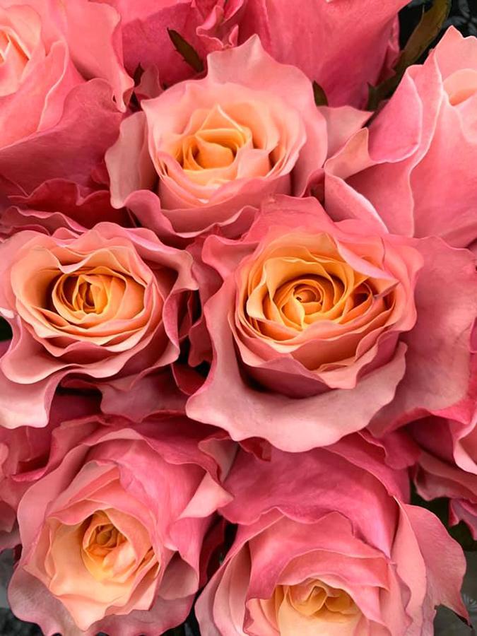 Sampling Several Rose Varieties
