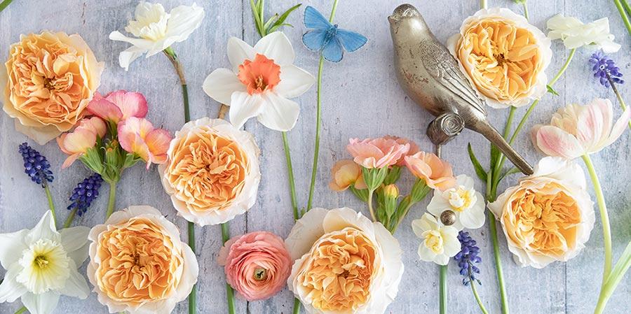 Spring Floral Inspo – David Austin